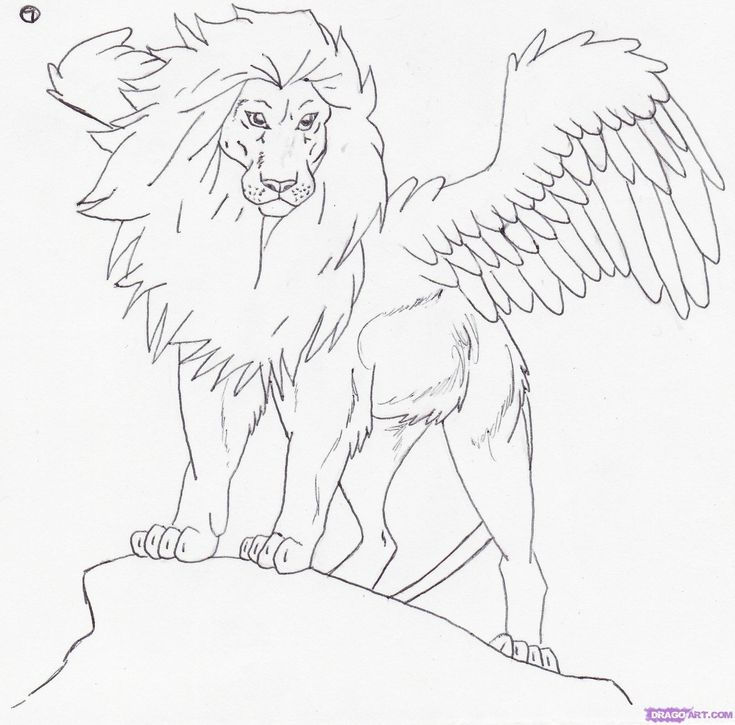 Line Drawing Lion Face : Lion face line drawing pinterest