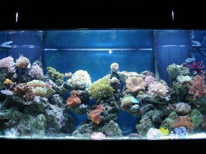 saltwater aquarium fish location aquarium size and aquarium stand ...