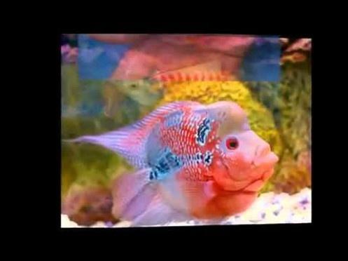 Tropical fish wholesale tropical fish wholesale google for Tropical fish wholesale