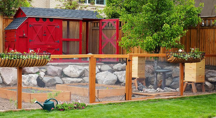 Beautiful chicken run let 39 s cluck pinterest for Red chicken coop
