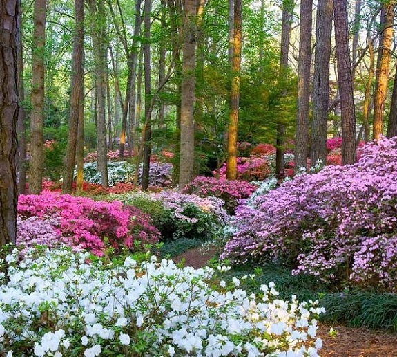 Pin by perry frensley on places i have been pinterest - Callaway gardens pine mountain georgia ...