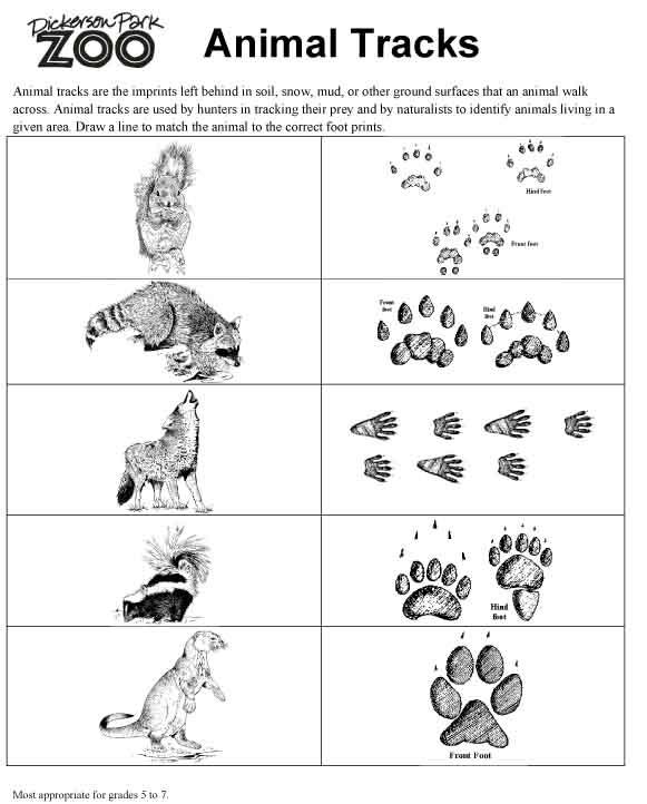 Animal Tracks : Things to teach girls : Pinterest