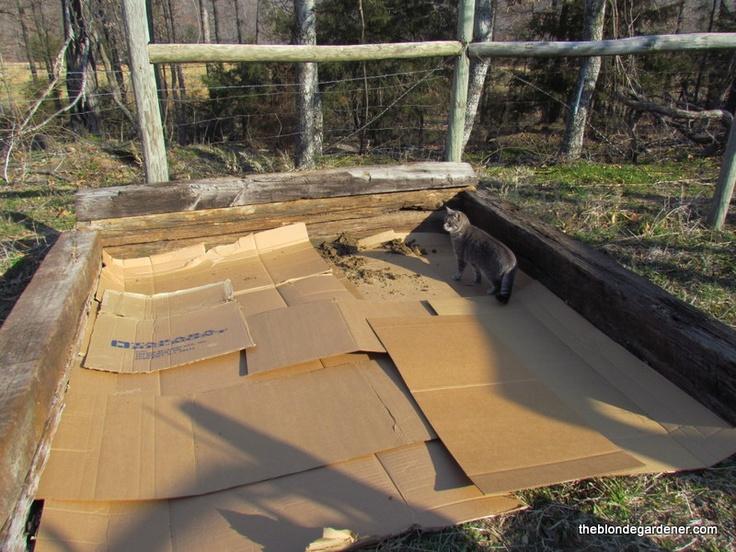 cardboard as a weed barrier garden pinterest. Black Bedroom Furniture Sets. Home Design Ideas