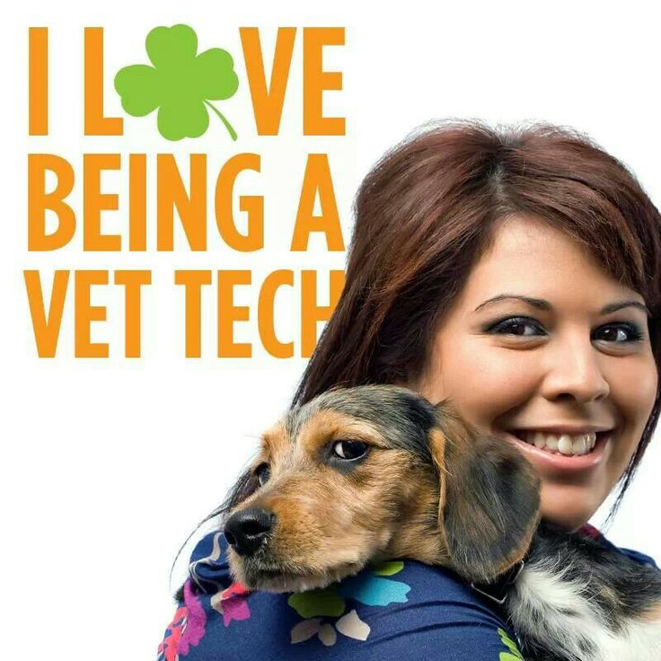 about being a veterinary technician
