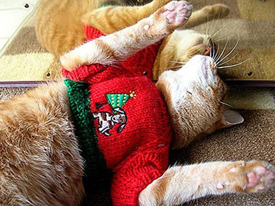 Tis the season      for cats in ugly Christmas sweaters   Cats In Christmas Sweaters