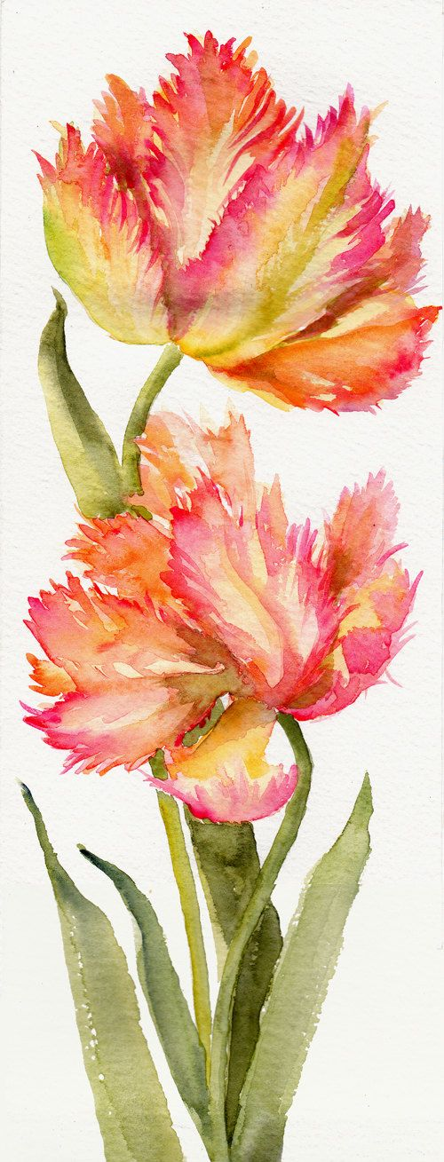 Parrot Tulips  ORIGINAL watercolor on paper  by Thepoetgarden, $33.00