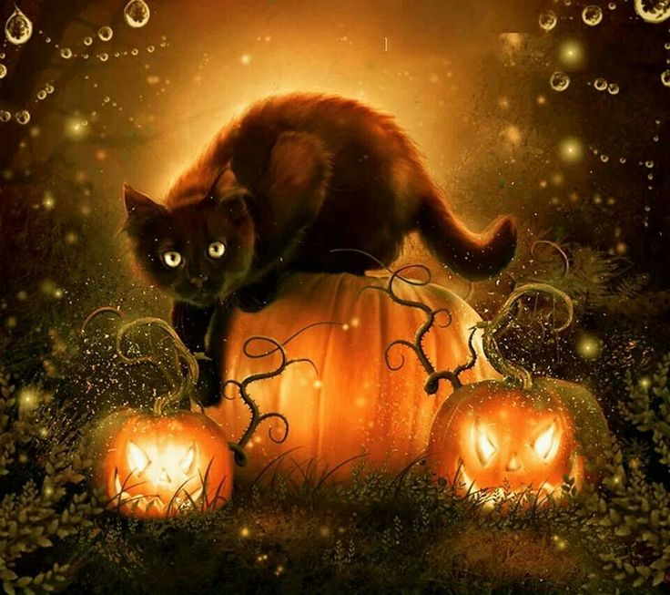 Cute halloween black cat