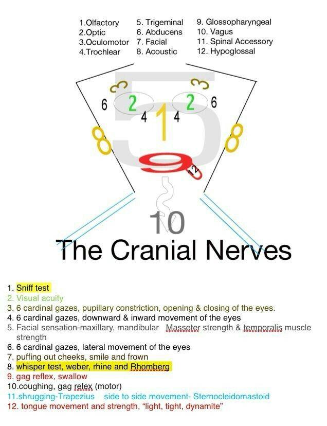 Similiar Cranial Nerve Number 8 Keywords