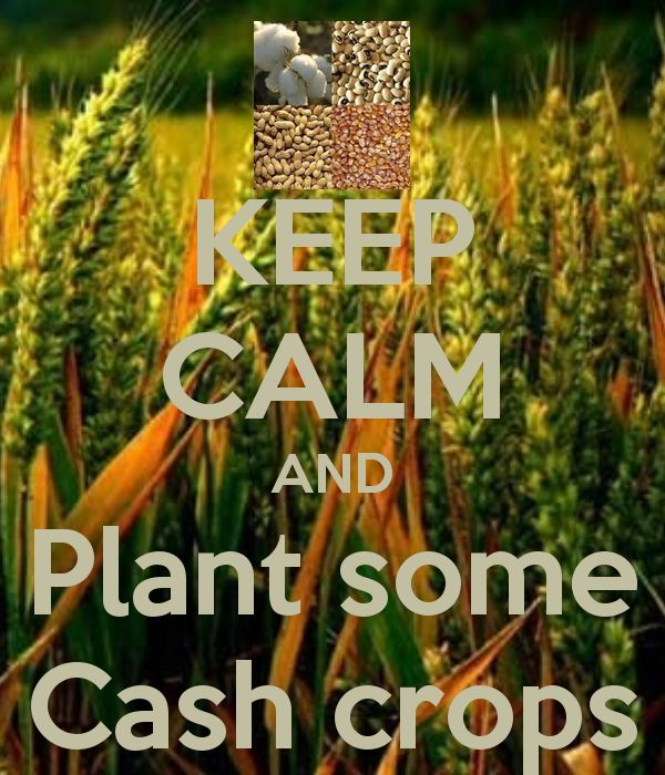 cash crop Find reviews, trailers, release dates, news, screenshots, walkthroughs, and more for cash crop here on gamespot.