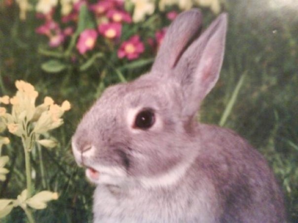 The bunny with the little open mouth.