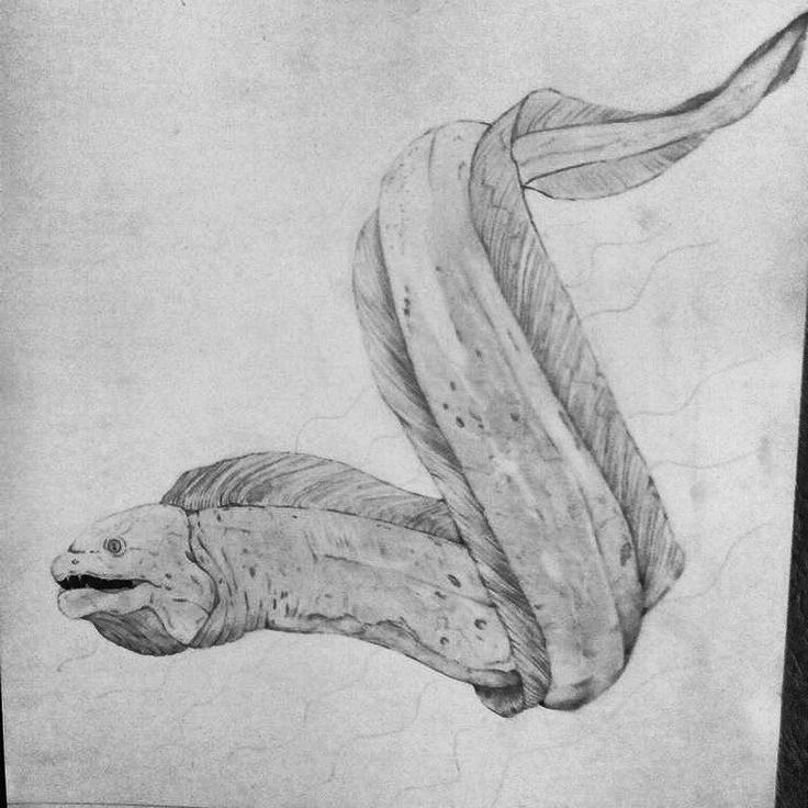 moray eel pencil drawing by wietzef1995 | Artwork | Pinterest - photo#20