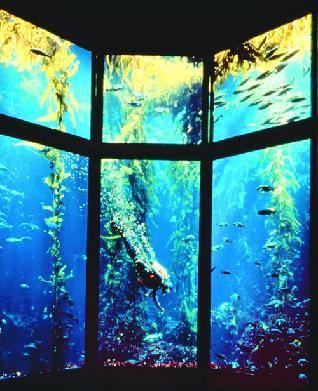 Monterey Bay Aquarium Monterey Ca My Travels Pinterest