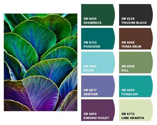 Different And Great Color Schemes Pinterest