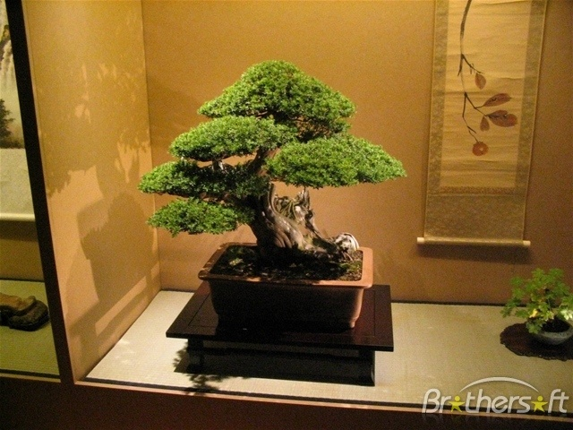 bonsai gallery 1800flowers
