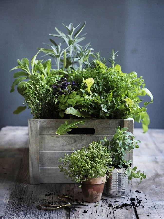 Wild Backyard Herbs : Wild herbs  EatsArts Food Photography  Herbs  Pinterest