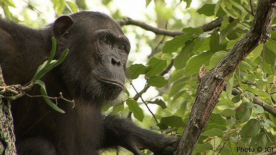 $15 helps the Jane Goodall Institute protect wild chimpanzees in Gombe National Park, Tanzania.