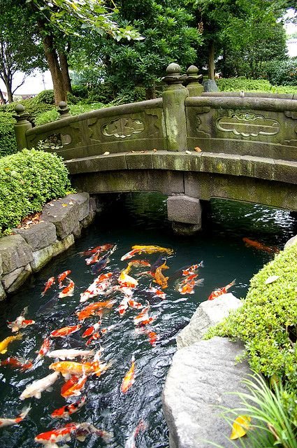A creek or a pond with koi in it, and a stone bridge over it.