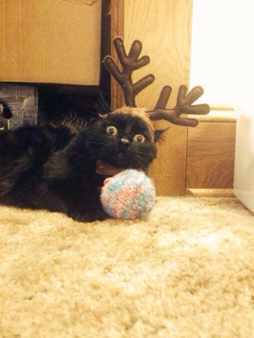 Reindeer cat | Holiday stuff | Pinterest