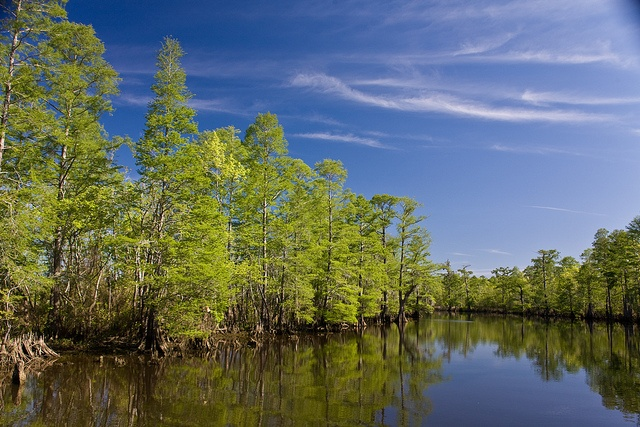 Neches River - Beaumont, Texas. The Neches is known as the last wild river in Texas. Flowing 416 miles, it runs through the heart of the Big Thicket National Preserve & downtown Beaumont.
