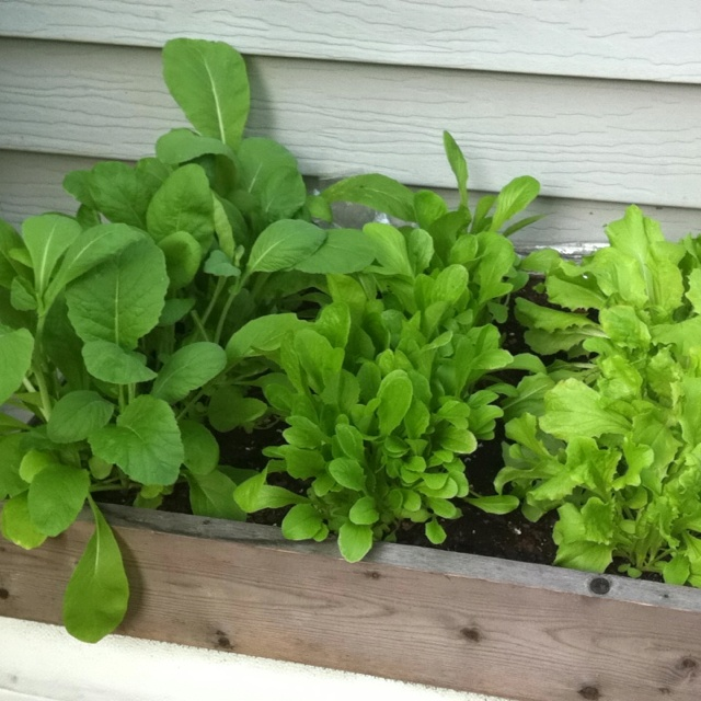 DIY Lettuce Box