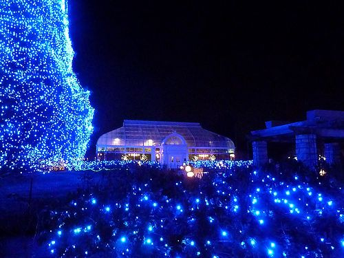 Lights Before Christmas Toledo Zoo | Decorating Ideas