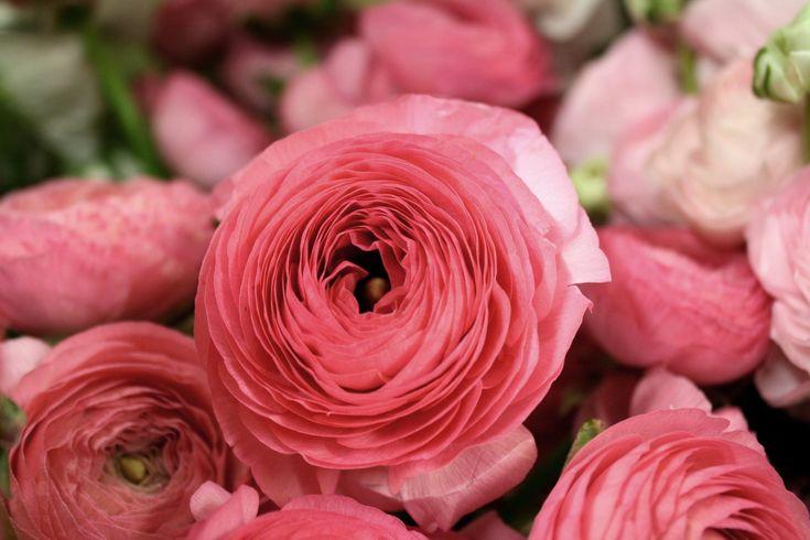 La Fleur Vintage: Know Your Flowers! (These are ranunculus).