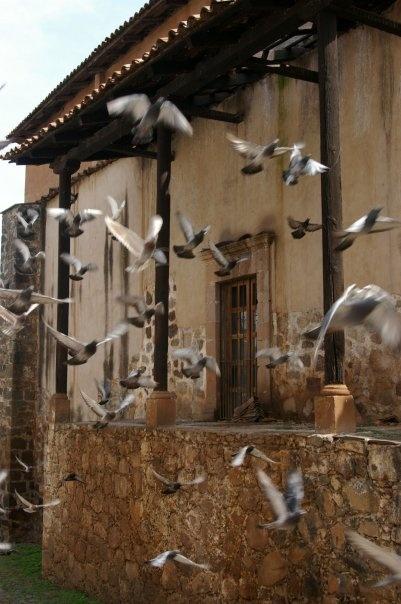 Birds flying through the town in Michoacan, Mexico.    Aves volando por el pueblo en Michoacán, México.