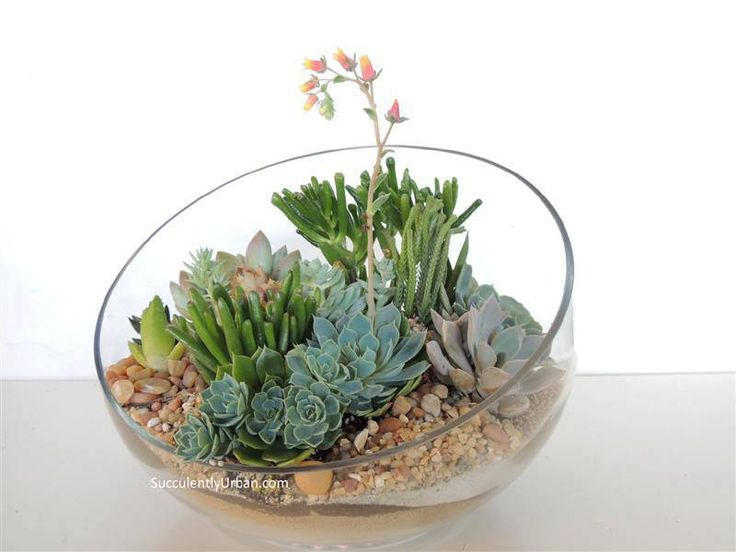 Succulent Centerpieces Terrarium Pinterest