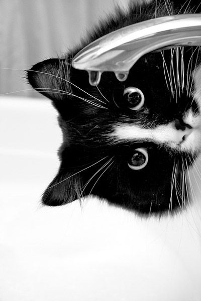 cat and faucet drip