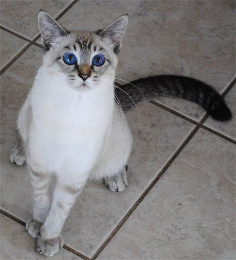 Kathy S Cat Rescue