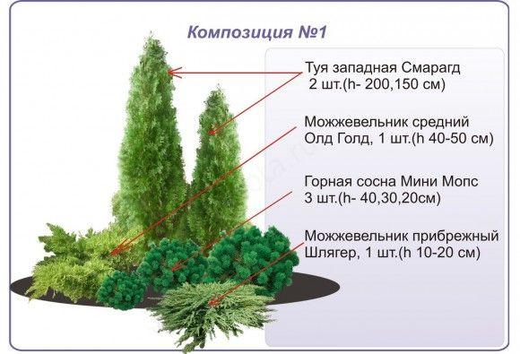 Схемы клумб из хвойных и кустарников