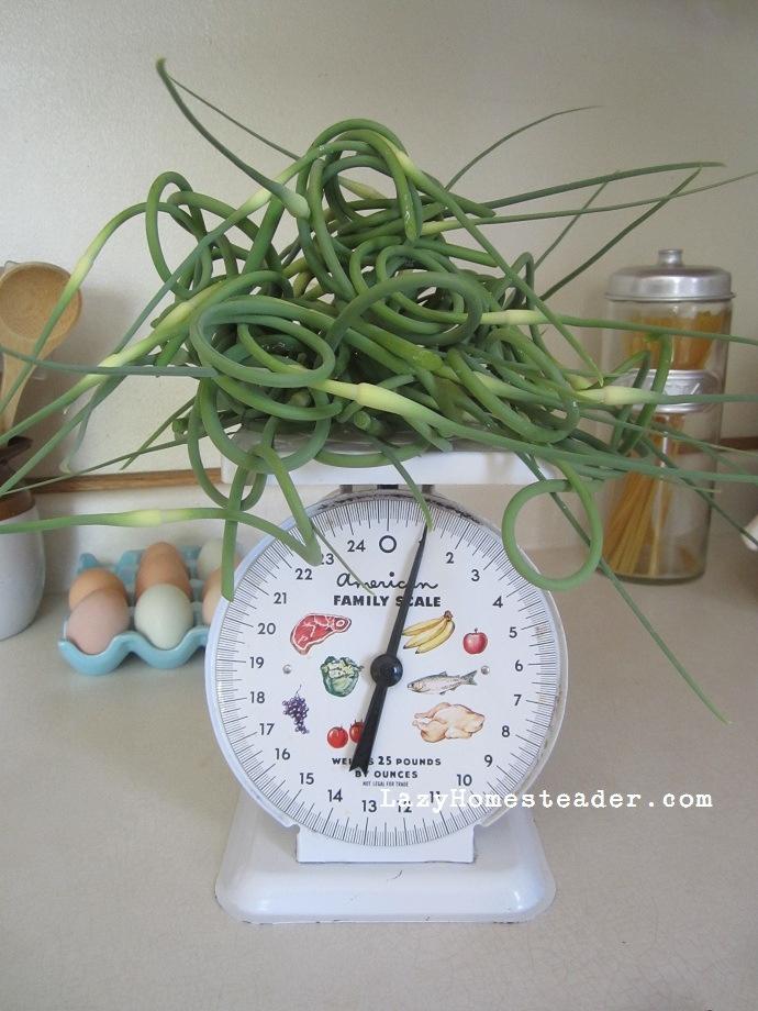 Garlic Scape Pesto On Fusilli With Garlic Scape Garlic Bread Recipes ...