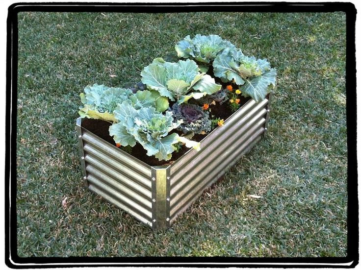 corrugated raised garden bed Gardening Pinterest