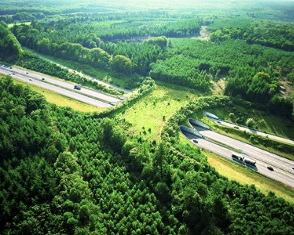 Ecoduct De Woeste Hoeve over the highway A50, Netherlands; The Netherlands contains an impressive display of over 600 wildlife crossings (including underpasses and ecoducts) that have been used to protect populations of wild boar, red deer, roe deer, and the endangered European badger.