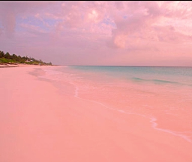 Pink sands beach harbour island bahamas globetrotter for Pink sand beaches bahamas