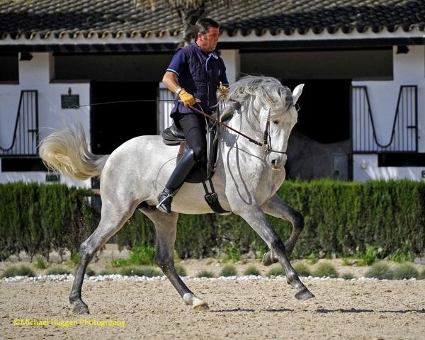 Spanish Horse Trainer video