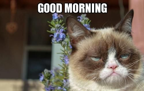 Angry Good Morning Meme : Cute good morning puppy meme imgkid the image