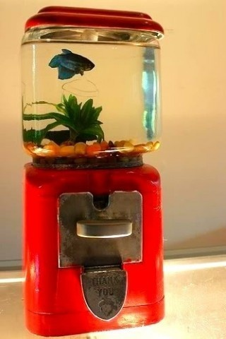unique fish tank...i mean its cool, but what if someone turns the knob ...