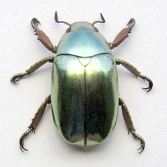 Real Jewel Beetle Looks Like SilverGold by ButterfliesArtist, $119.99