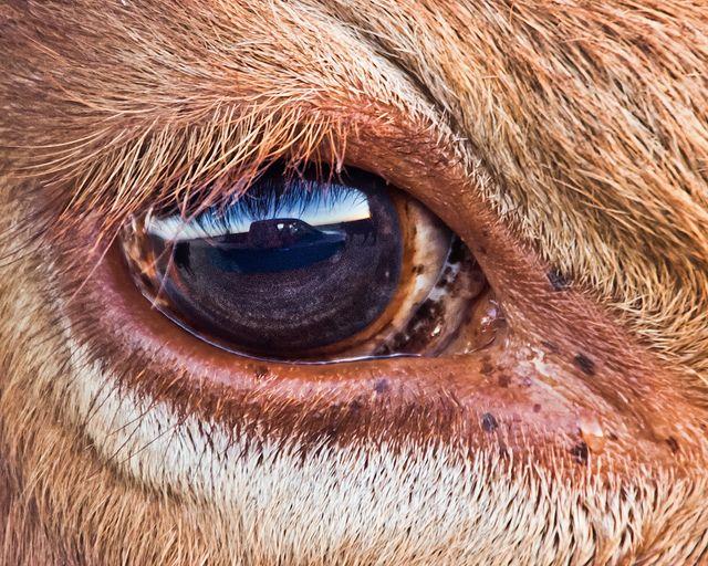 Раз уж мы заговорили о гетерохромии среди животного мира, давайте затронем тему дикой природы