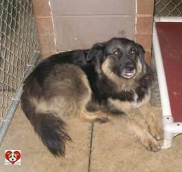 Northern Indiana Dog Adoption