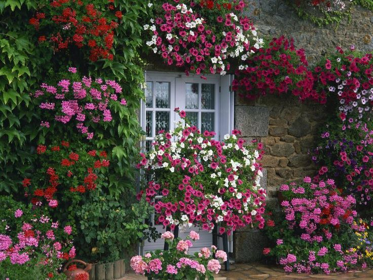 French cottage garden flowers galore gardens and for Jardin french to english