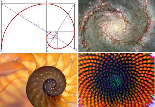 Golden ratio art lessons pinterest for Golden ratio artwork