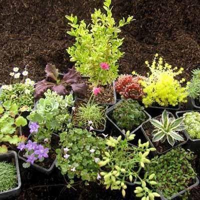 Fairy Garden Plants Gardening Pinterest Best Plants For Fairy Gardens