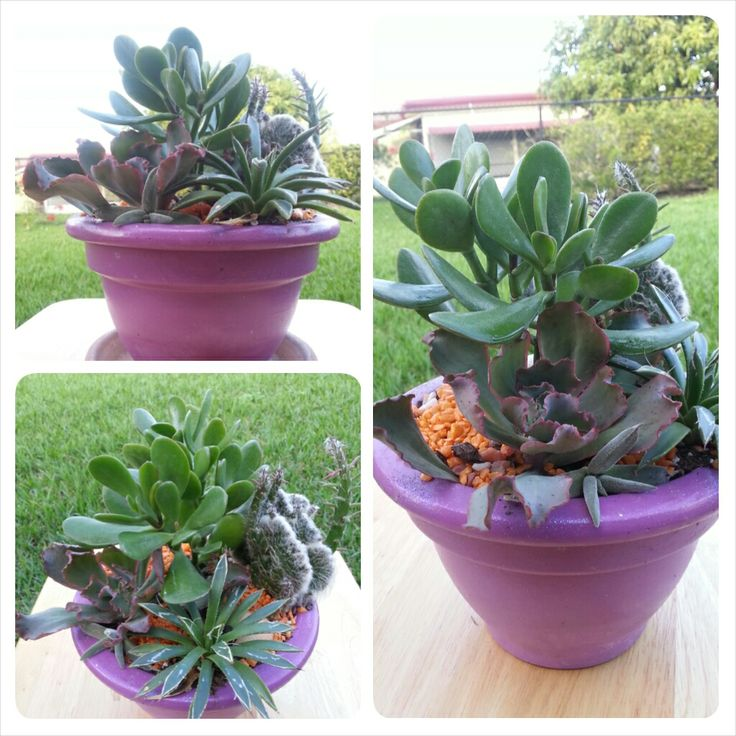 Mini Succulent Garden Container Garden Pinterest