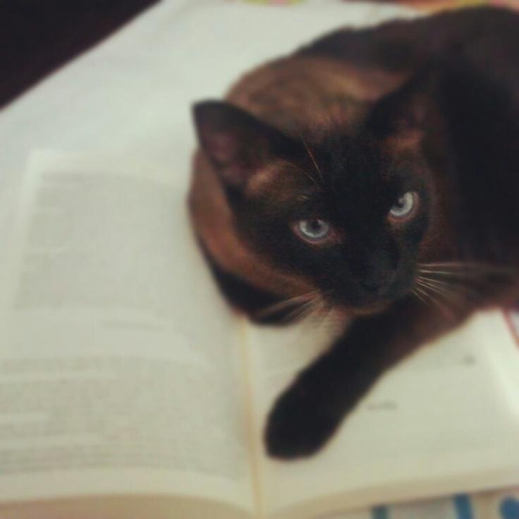 My reader cat *-*