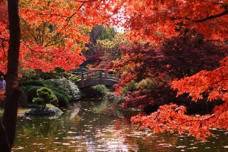 Japanese Garden Ft Worth Ft Worth Love Pinterest
