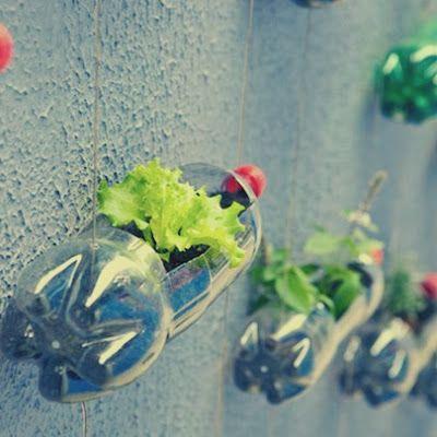 C mo hacer un jard n vertical ideas para bandera azul - Ideas para hacer un jardin ...