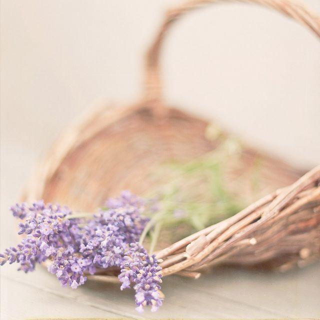 lavender. love the soft tones.
