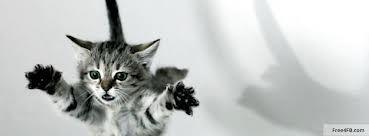 flying!!! | Wonderful animals | Pinterest